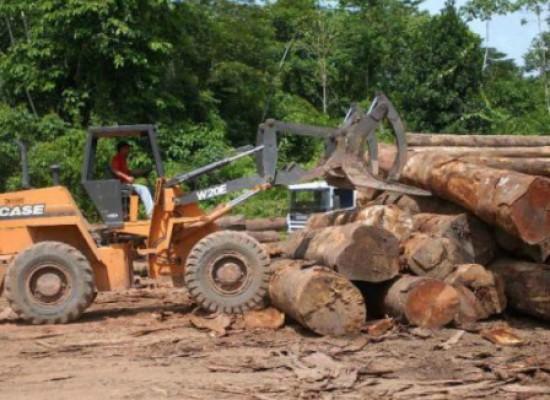 Amazônia perde 7.989 km² de floresta