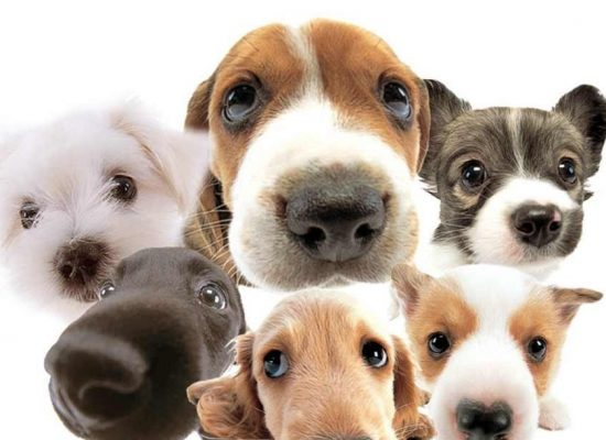 Ilhéus terá feira de adoção de animais em julho, no Pontal