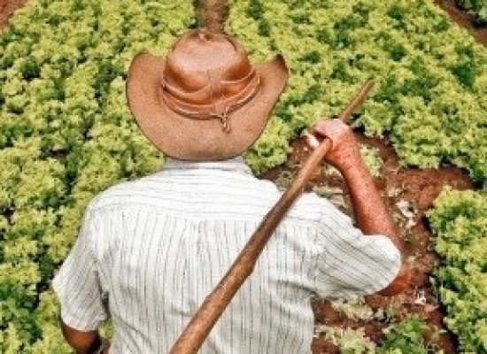 Câmara pretende ampliar proteção a agricultor familiar na reforma da Previdência