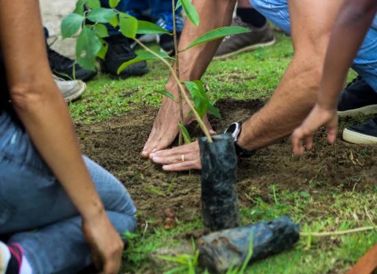 Prefeitura realiza semana de treinamento sobre arborização em parceria com MPE