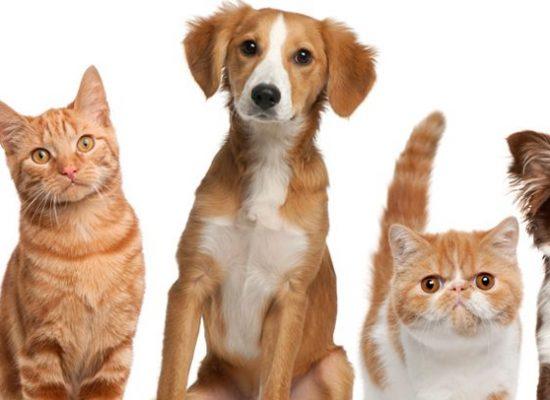 Praça São João Batista recebe feira de adoção de animais doméstico
