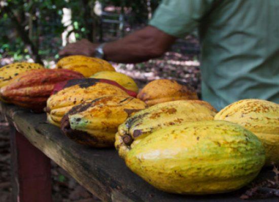 Governo do Estado vai implantar a Estrada do Chocolate entre Ilhéus e Urucuca