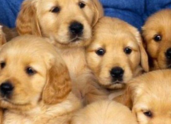 Bazar solidário em prol dos animais neste sábado (21)