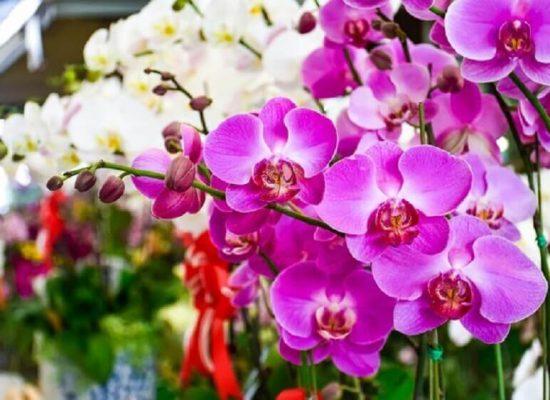 """Exposição """"Ilhéus em Flor"""" marca a chegada da primavera em Ilhéus"""