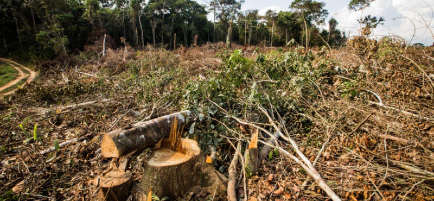 Ministro do Meio Ambiente busca US$1 bilhão em ajuda externa para conter desmatamento na Amazônia