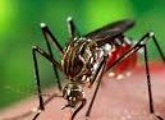 Com a chegada do verão, Ilhéus intensifica ações de combate ao mosquito Aedes aegypti