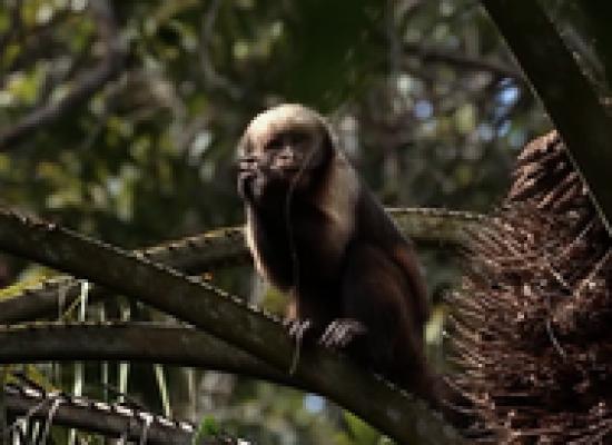 Unidades de conservação no sul da Bahia