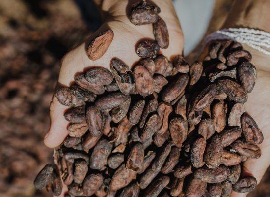 Bahia se reinventa com produção de Chocolate de Origem