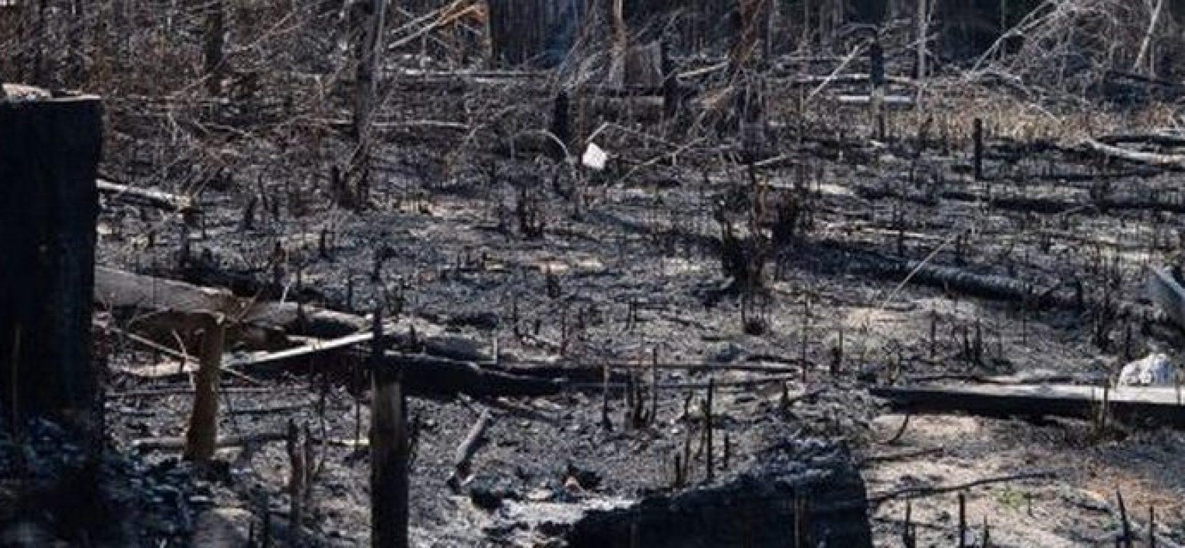 Resultado de imagem para forçando o desmatamento