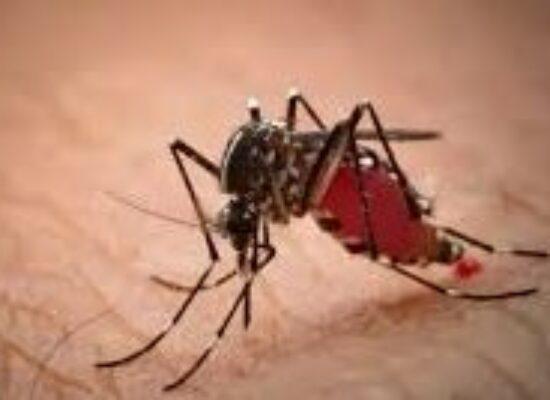 ESCUTA ILHÉUS: Projeto obriga a Prefeitura a fornecer, gratuitamente, repelente contra mosquitos e muriçocas