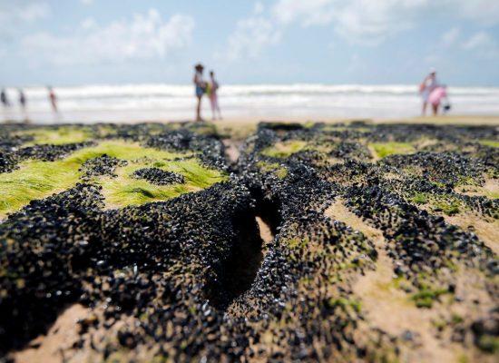 UFRJ aponta que óleo pode ter saído de área a 700 km da costa