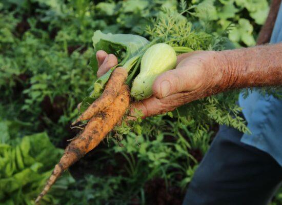 Governo repassa R$ 72,9 milhões a estados para a agricultura familiar