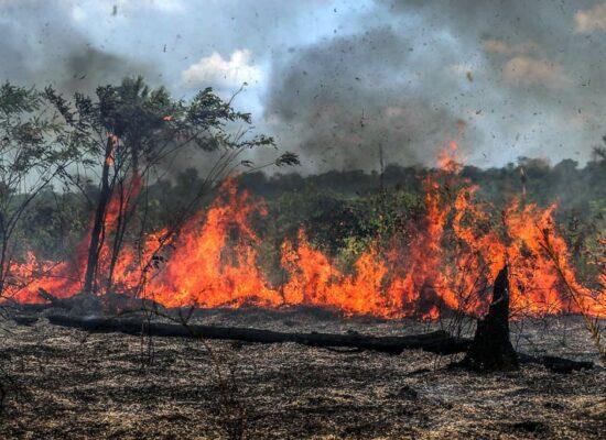 Desmatamento cresce 9,5% em um ano e atinge área de 11 mil km²