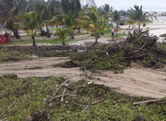 Prefeitura de Ilhéus intensifica limpeza das praias para retirada de baronesas
