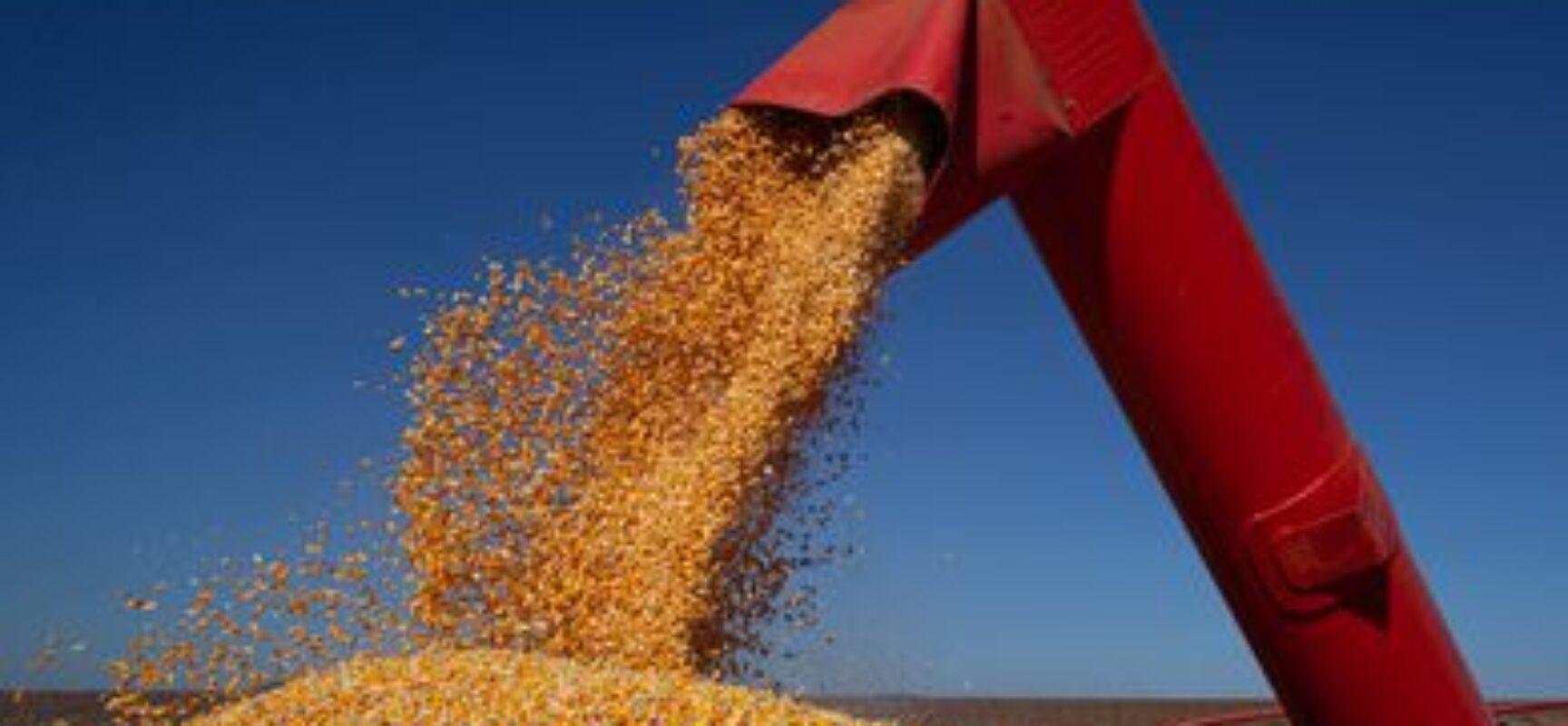 Bolsonaro diz que safra brasileira chegará a 300 milhões de toneladas