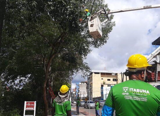 Prefeitura intensifica ação preventiva em Itabuna com a poda de árvores