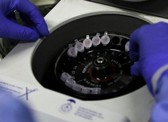 Lei permite que indústria veterinária produza vacina contra covid