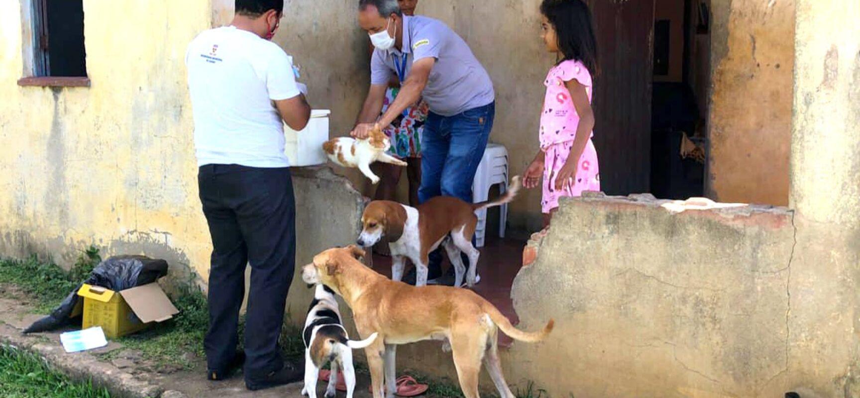 Diretoria de Zoonoses prossegue com vacinação antirrábica em Itabuna nesta sexta