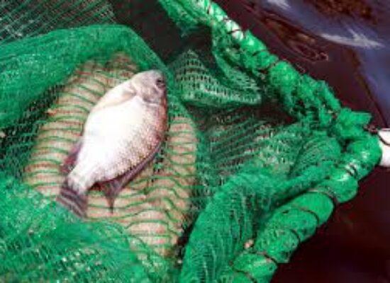 Técnicos da Agricultura e Meio Ambiente vão participar de capacitação em piscicultura