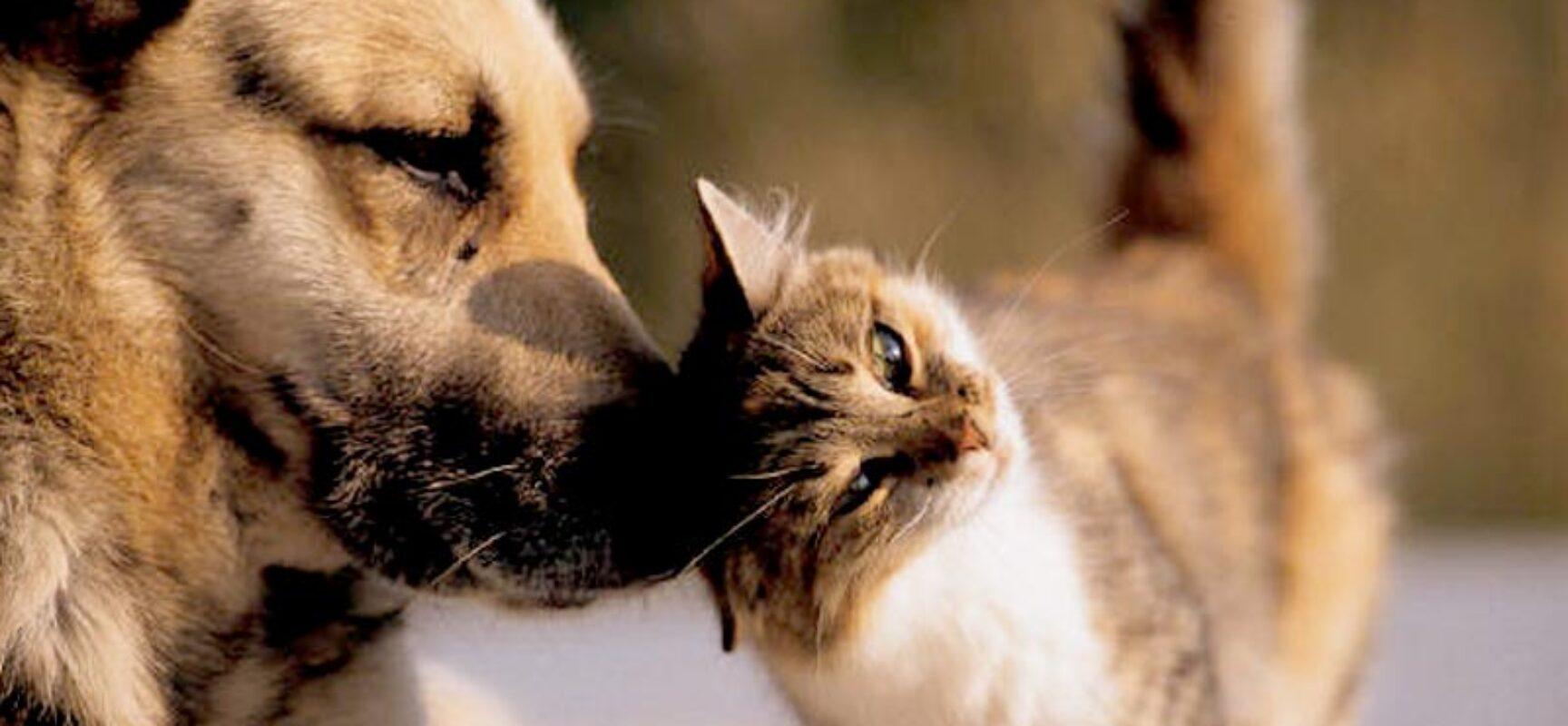 Ilhéus: Vacinação antirrábica para cães e gatos acontece neste sábado das 8h às 16h