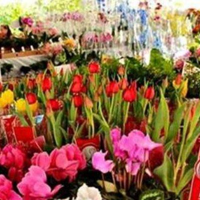 Ilhéus em Flor: Feira de Flores de Holambra vai colorir e movimentar Av. Soares Lopes